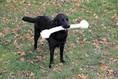 Hundepension, Hundeknochen, Hotel Hundeparadies
