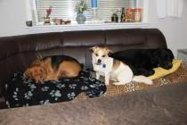 Hundehotel, Wiehl, Hundebetreuung