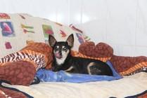 Hundepension, Hotel Hundeparadies, Rundum-Betreuung