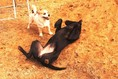 Unterkunft für den Hund ohne Zwinger, Unterbringung für den Hund, Hundeunterbringung mit Garten